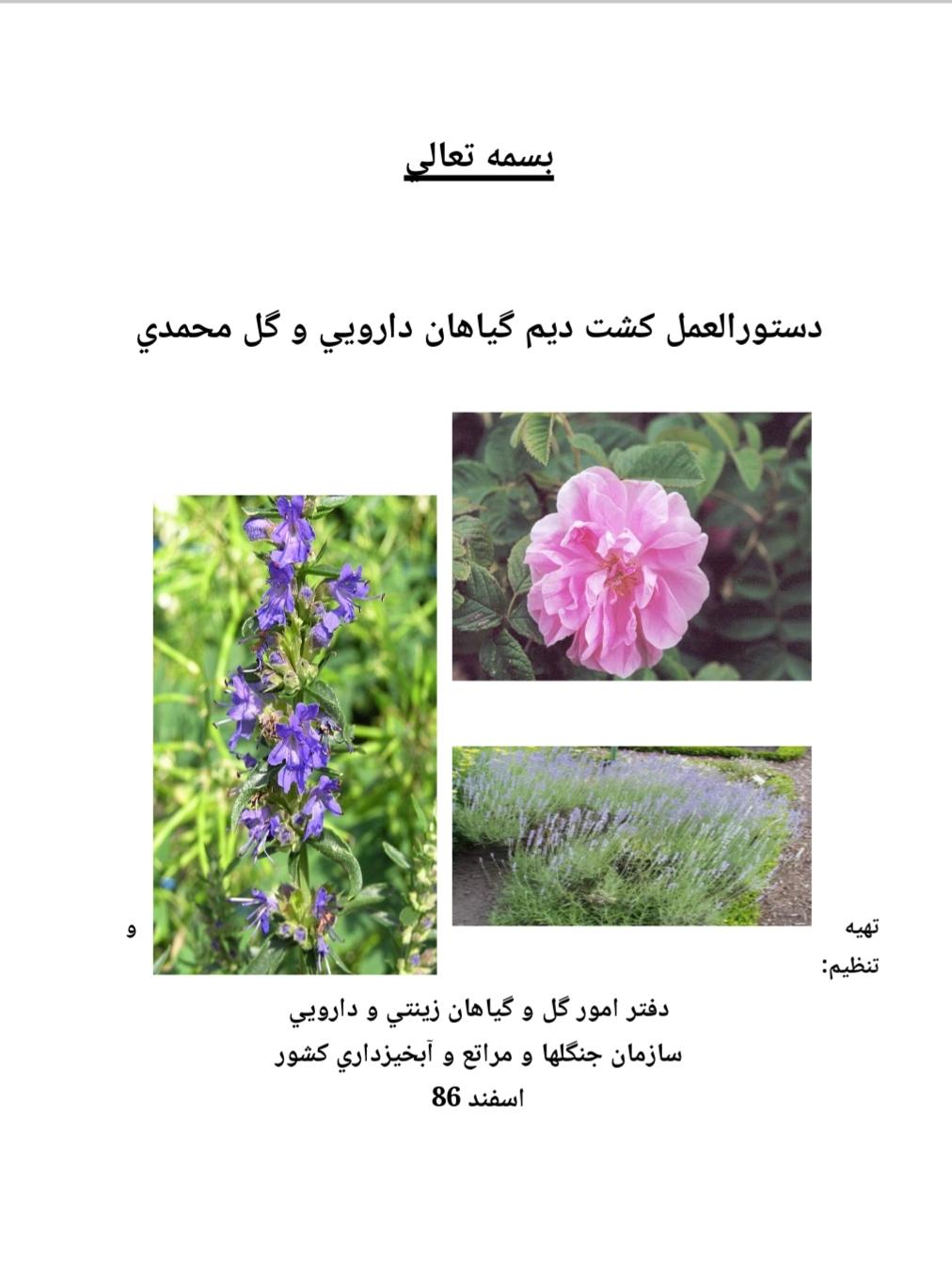 دستورالعمل كشت ديم گياهان دارويي و گل محمدي